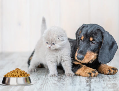 pet food market is arising