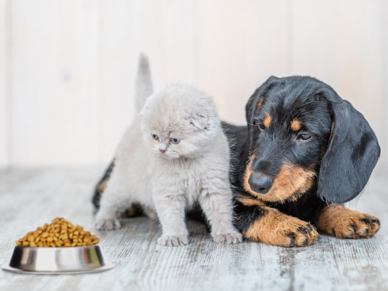 pet food market is arising