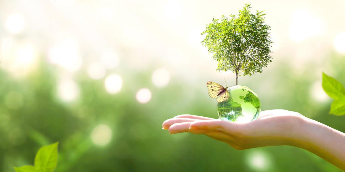 sostenibilità e scelte green